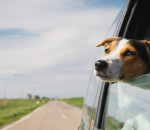 Keeping Your Pets Safe in Case of a Crash